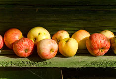 Apples, apple, fruit, red, background, fresh, autumn, fall. Summer apples on the ground and on the branches Stock Photography