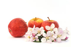 Apples and apple-tree blossoms Royalty Free Stock Photos