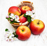 Apples  and apple tree blossoms Royalty Free Stock Images
