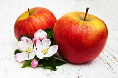 Apples and apple tree blossoms Royalty Free Stock Image