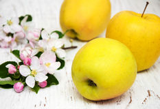 Apples and apple tree blossoms Stock Photo