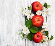 Apples and apple tree blossoms Stock Photography
