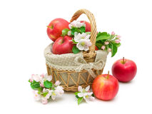 Apples and apple-tree flowers  on white background Stock Photo