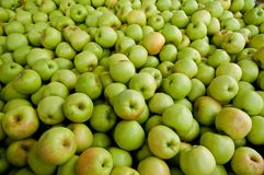 Apples.apples,apples. A shot of a bunch of apples Royalty Free Stock Image