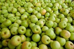 Apples.apples, manzanas Imagen de archivo libre de regalías