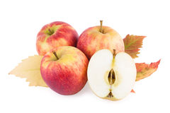 Apples with autumn leaf isolated on white Stock Photography
