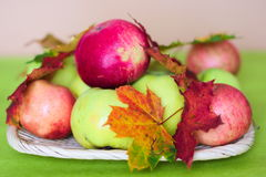 Apples and autumn leaves background Stock Images