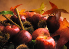 Apples in the autumn Stock Image
