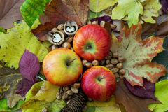 Apples, autumn leaves, pine cone and nuts Royalty Free Stock Image