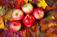 Apples and autumn leaves on wooden background Stock Photos