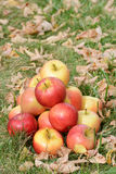 Apples in the autumn time Stock Photos