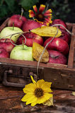 Apples autumn Stock Photos