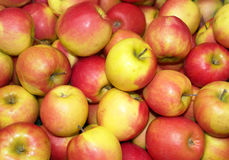 Apples Background Stock Image