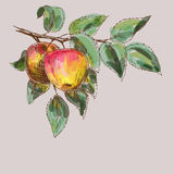 Apples background Royalty Free Stock Images