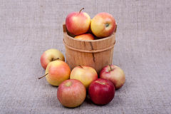 Apples in a barrel Royalty Free Stock Images