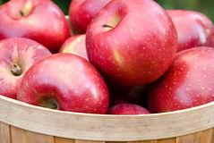 Apples in a Basket. Closeup of apples in a wooden basket Stock Photo