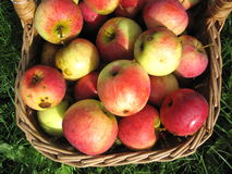 Apples in basket. Can use as background Stock Images