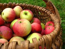 Apples in basket. Red and yellow apples in the basket Royalty Free Stock Photo