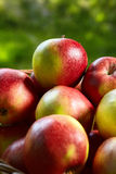 Apples in the Basket. Royalty Free Stock Image