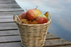 Apples in a Basket. Basket of apples next to a lake. A scene from Autumn royalty free stock images