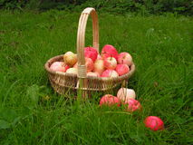 Apples' basket. Red apples with basket on the grean grass stock photography