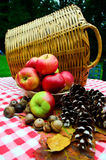 Apples and basket. A bowl full of ripe red juicy apples along side some acorns and pine cones sitting on a table with a checked cloth and fall leaves Stock Image