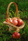 Apples are in a basket. Red apples are in a basket which stands on a grass Royalty Free Stock Image