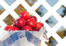 Apples in a basket against white lattice Royalty Free Stock Photography