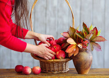 Apples in a basket with autumn leaves Royalty Free Stock Images