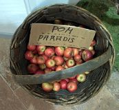 Apples in the basket case. A Group of red apples in a basket in an old farm in alpen land stock photography