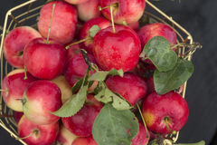 Apples in a basket. Close up royalty free stock images