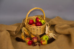 Apples in a Basket. Full basket of apples. Gifts of Autumn stock photography