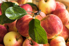 Apples. Basket full of red ripe apples Stock Photography