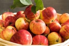 Apples. Basket full of red ripe apples Stock Photos