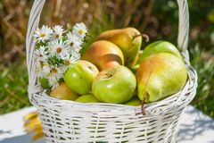 Apples in basket Royalty Free Stock Image