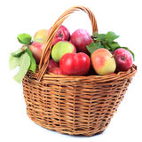 Apples in the basket, isolated. Stock Photography