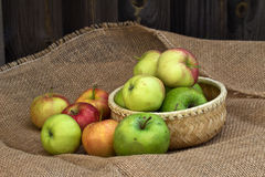 Apples in a Basket. Apples lie in a small basket stock images