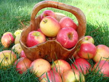 Apples in basket. Red apples in a wooden bowl shaped like a basket Royalty Free Stock Photos