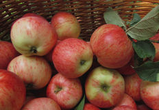 Apples in a basket. Ripe juicy apples in a wicker basket. The background is a rich harvest Stock Images
