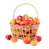 Apples in basket. Ripe red apples in basket on a white background Stock Photos