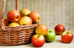 Apples in a basket, soft focus. Fresh colourful apples in a basket, soft focus Stock Photos