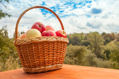 Apples in a basket on wooden table against garden background Stock Images