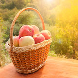 Apples in a basket on wooden table against garden background Stock Photo