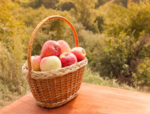 Apples in a basket on wooden table against garden background Royalty Free Stock Photography