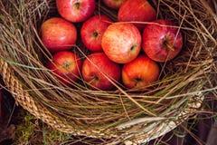 Apples in basket Stock Image