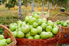 Apples in baskets Royalty Free Stock Photo