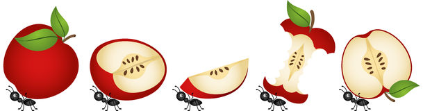 Apples being carried by ants. Scalable vectorial image representing a apples being carried by ants, isolated on white Stock Photos