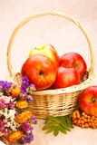 Apples, berries and flowers Stock Photography