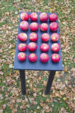 Apples on black table in autumn garden Royalty Free Stock Photos