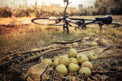Apples on blanket outside with bike in background Stock Photo